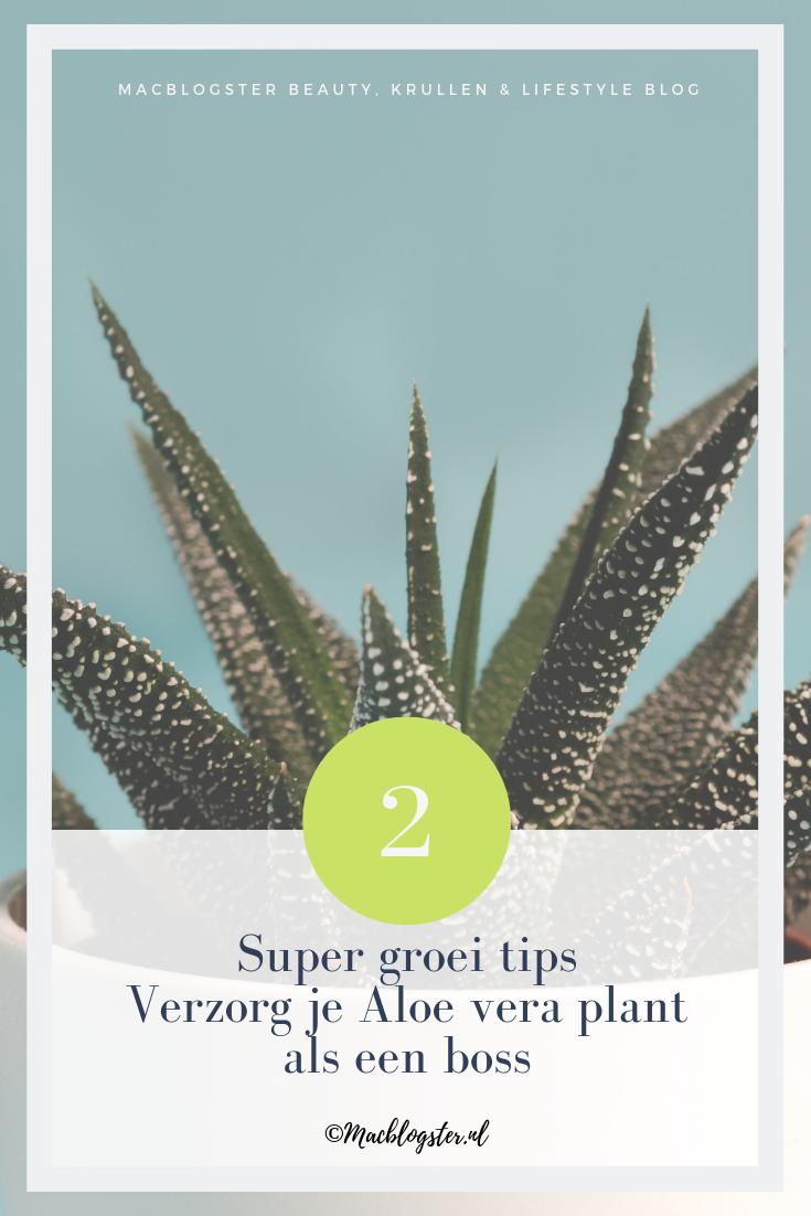 Door deze 2 tips groeit jouw Aloe Vera plant als kool!